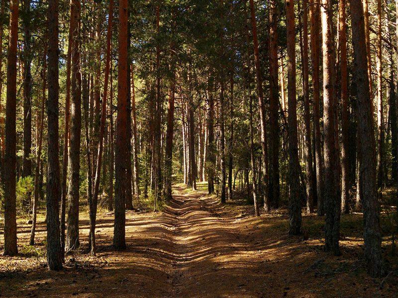 Certificación forestal en los montes del Ayuntamiento de Cuenca