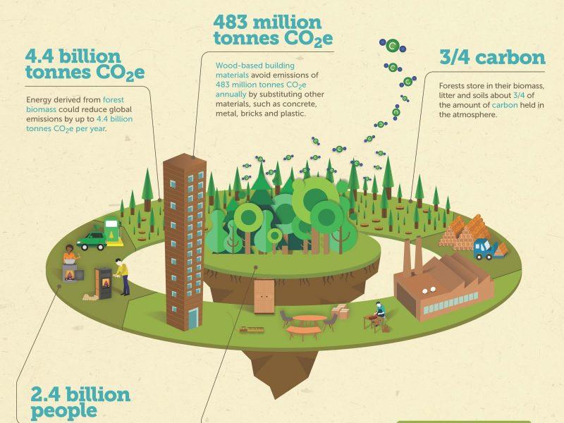 Innovación, diseño y tecnología aplicados a la generación de proyectos de negocio en el sector de la bioeconomía forestal