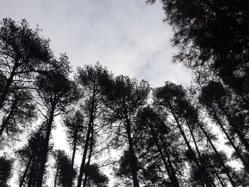 Bioeconomía circular: el futuro está en los bosques de Cuenca